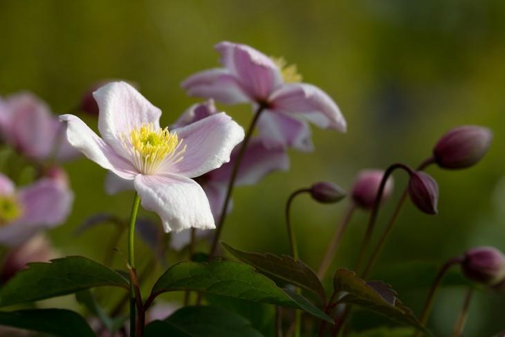 bloom-{2}