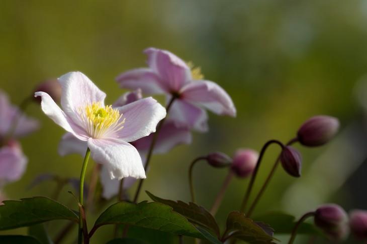 bloom-2-2